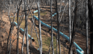 Mountain Valley Pipeline updates; Heroic Yellow Finch Tree Sits – more than 800 days
